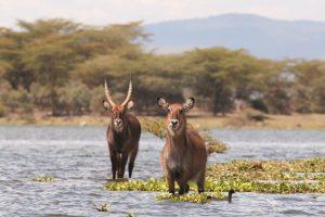 Lake Naivasha Kenya