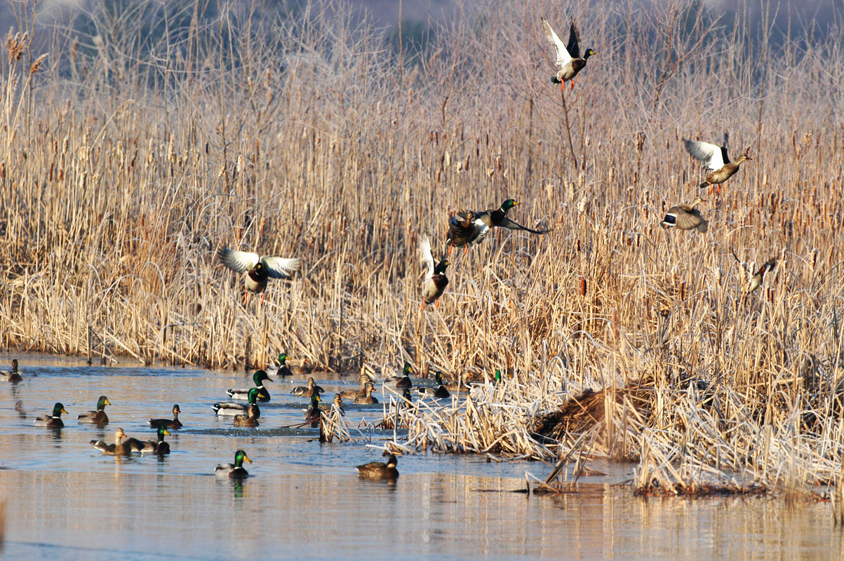 The Best Duck Hunt Tips