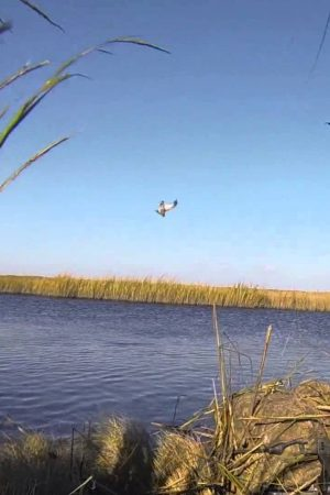 duck_hunting