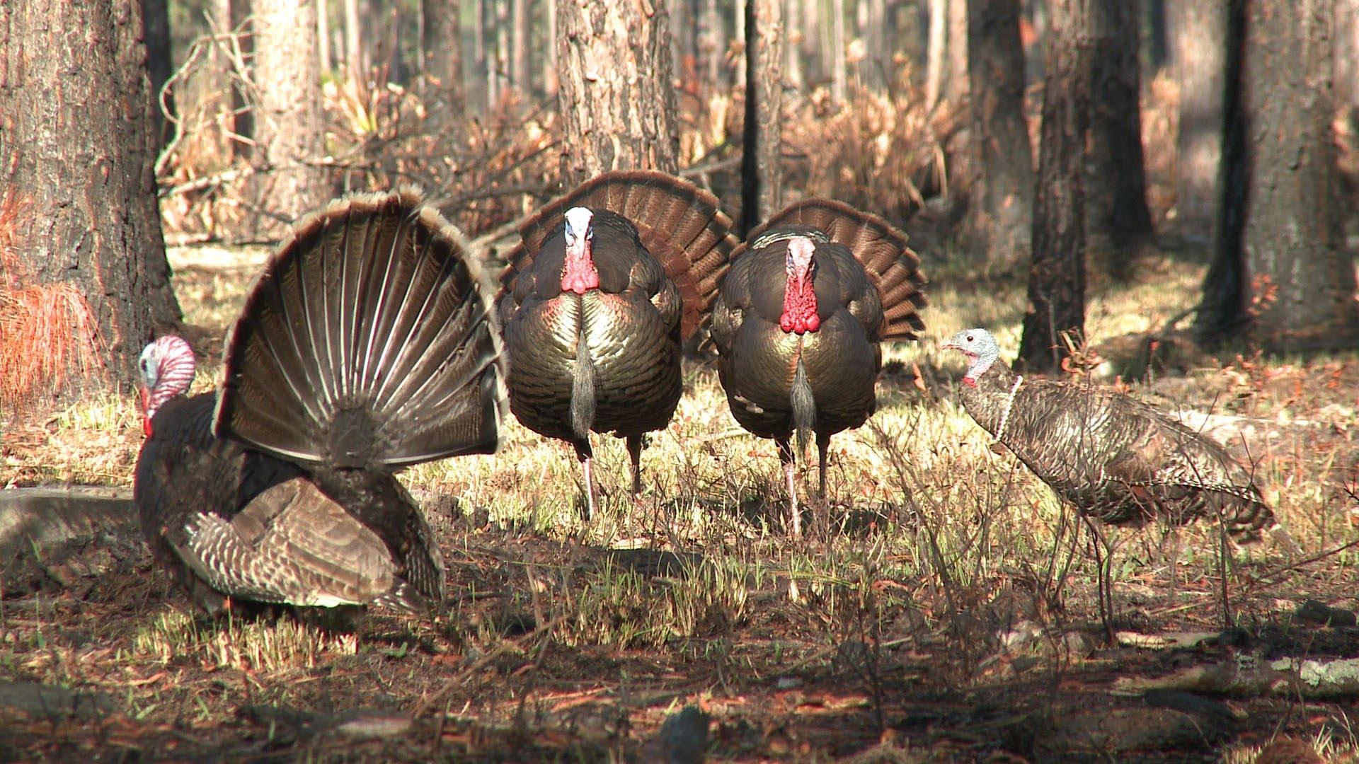 turkey_hunting